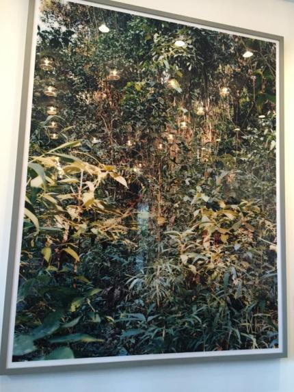 Paradise 28, Rio Madre de Dios, Peru, 2005 de Thomas Struth